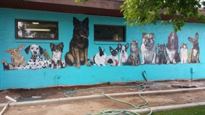 Murals for Pet Resorts and Vet clinics